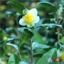 «Мацеста - чайные плантации»   Сочи
