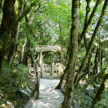 «Реликтовый лес» - Тисо-самшитовая роща, г.Ахун