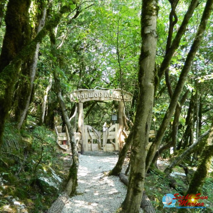 «Реликтовый лес» | Тисо-самшитовая роща | Гора Ахун | Обзорная экскурсия | Сочи