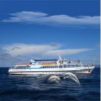 «Встреча с дельфинами» - прогулка на теплоходе | Порт Сочи | 1,5 часа